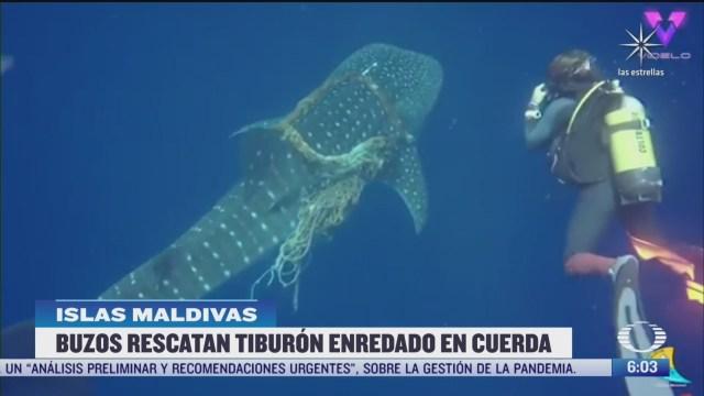 buzos rescatan tiburon enredado en cuerda
