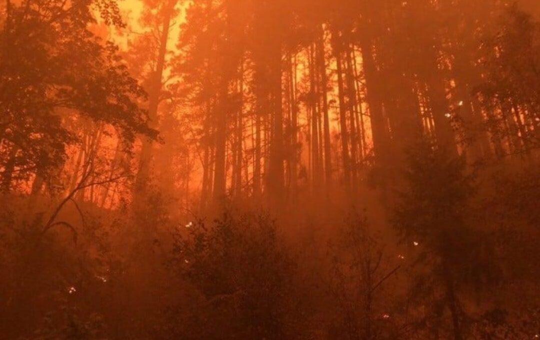 Niño de 13 murió abrazado a su perro en incendio en Oregon