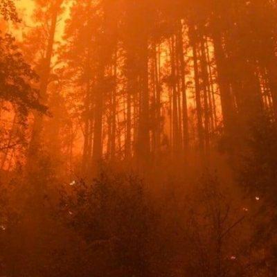 Niño de 13 murió abrazado a su perro en un incendio forestal en Oregon