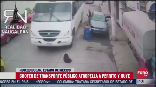 chofer de transporte publico atropella perro y huye
