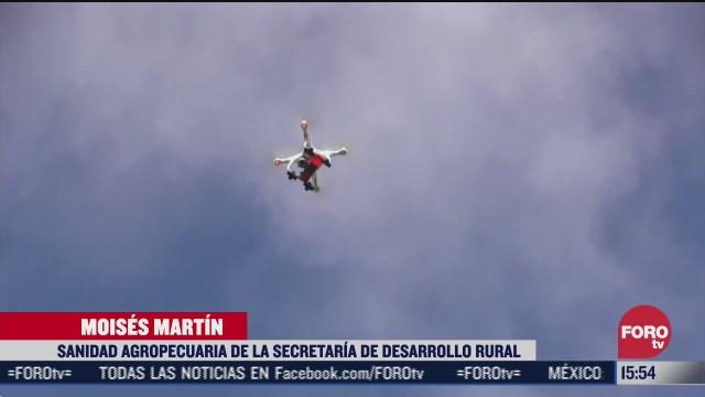 combaten plaga de langosta con drones en yucatan