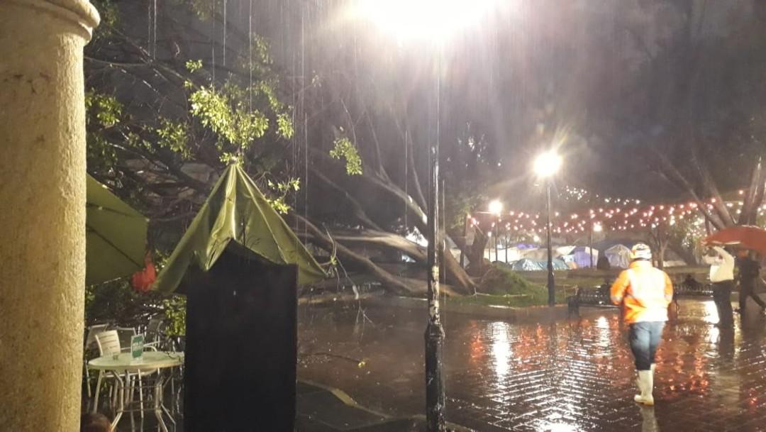 Fuertes lluvias en Oaxaca provocan la caída de un árbol en el Zócalo