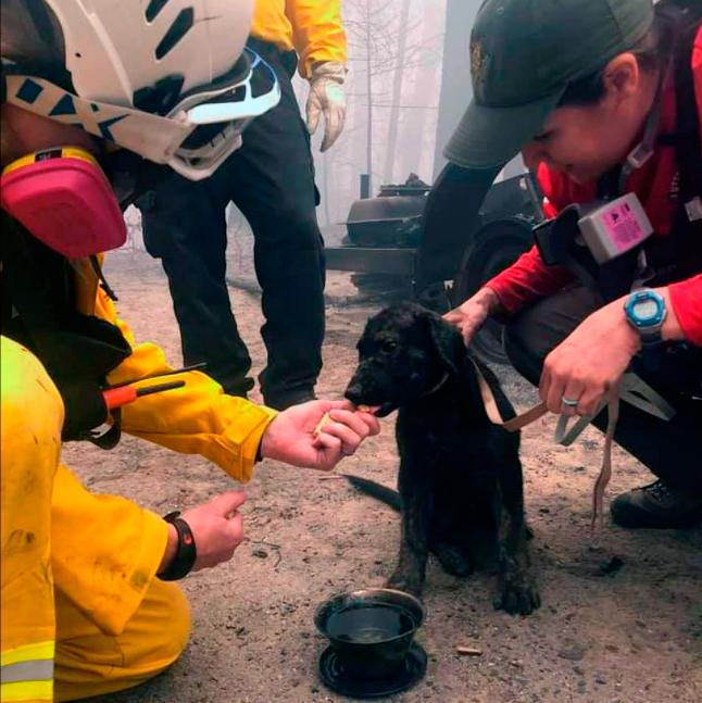 Rescate de perrito en incendios forestales en Estados Unidos