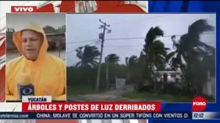 arboles y postes caidos en yucatan por huracan zeta