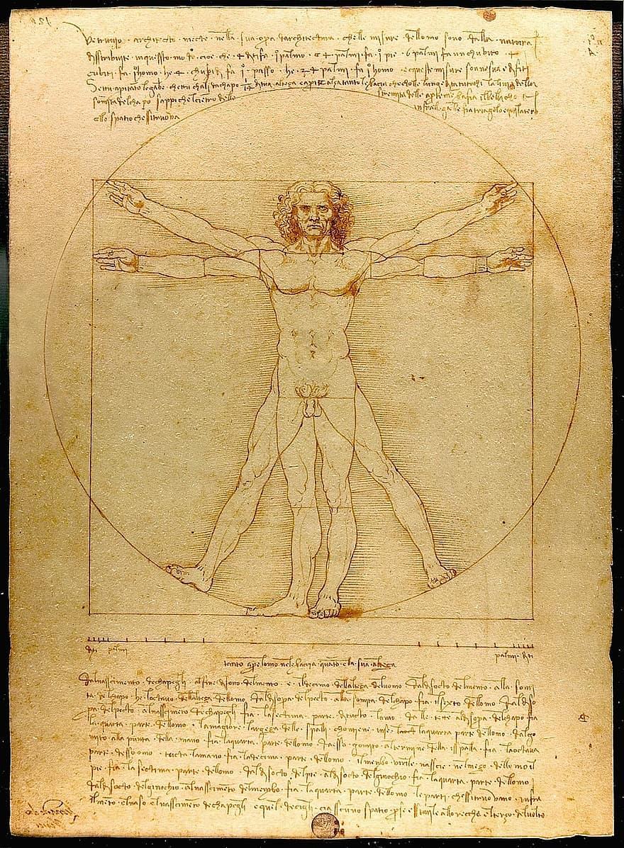 Hombre de Vitruvio por Leonardo Da Vinci