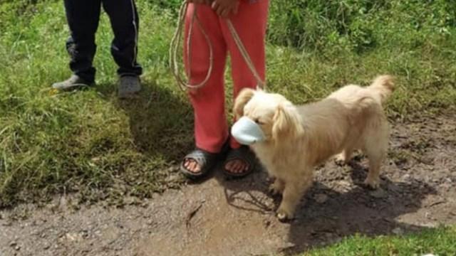 Llevan a un perrito con cubrebocas a vacunarse en Guatemala