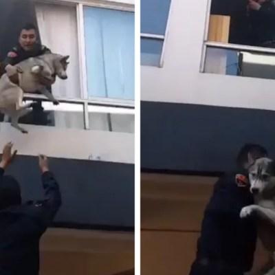 Policías de CDMX rescataron un perrito durante un incendio