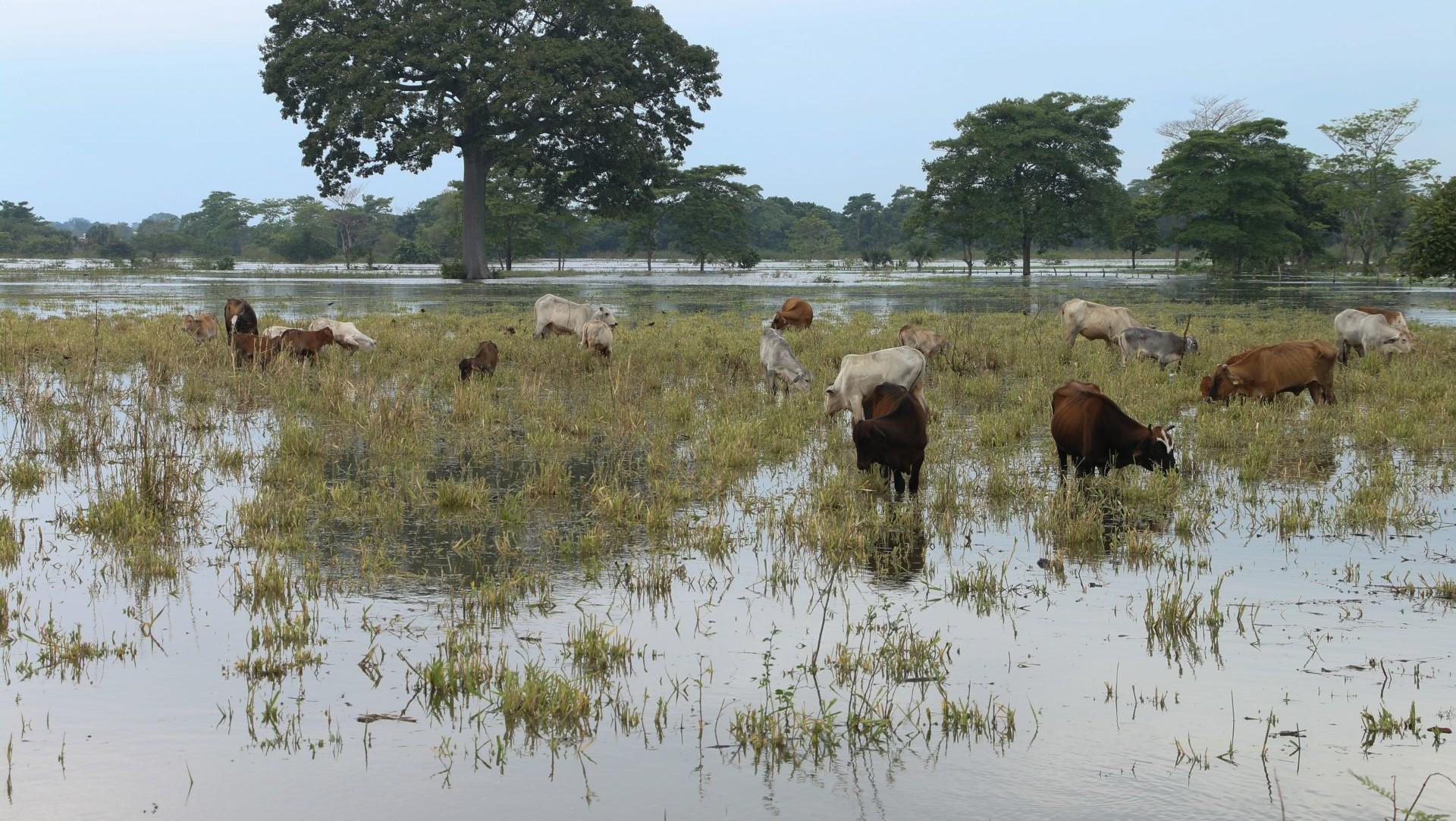 Casas continúan inundadas en Tabasco tras el paso de 'Delta' y 'Gamma'.