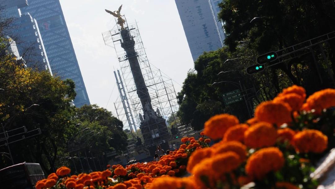 Las flores de cempasúchil adornan el Paseo de la Reforma