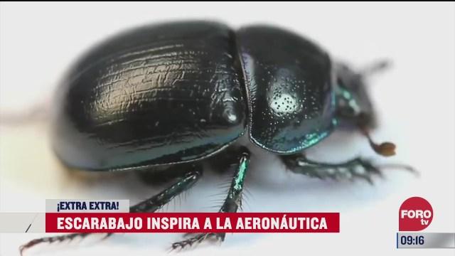 extra extra escarabajo inspira a la aeronautica