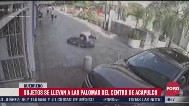 hombres roban palomas del centro de acapulco