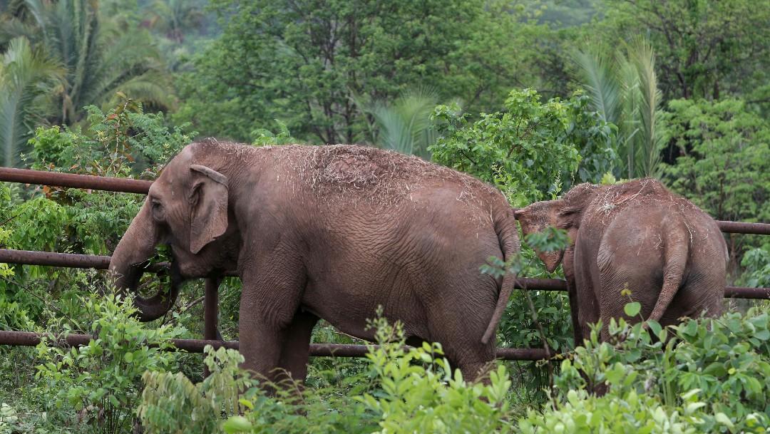 Incendio forestal en Brasil se aproxima al Santuario de Elefantes