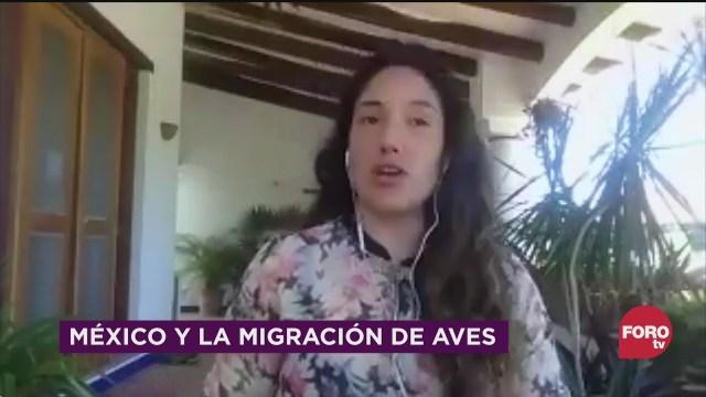 mexico y la migracion de aves