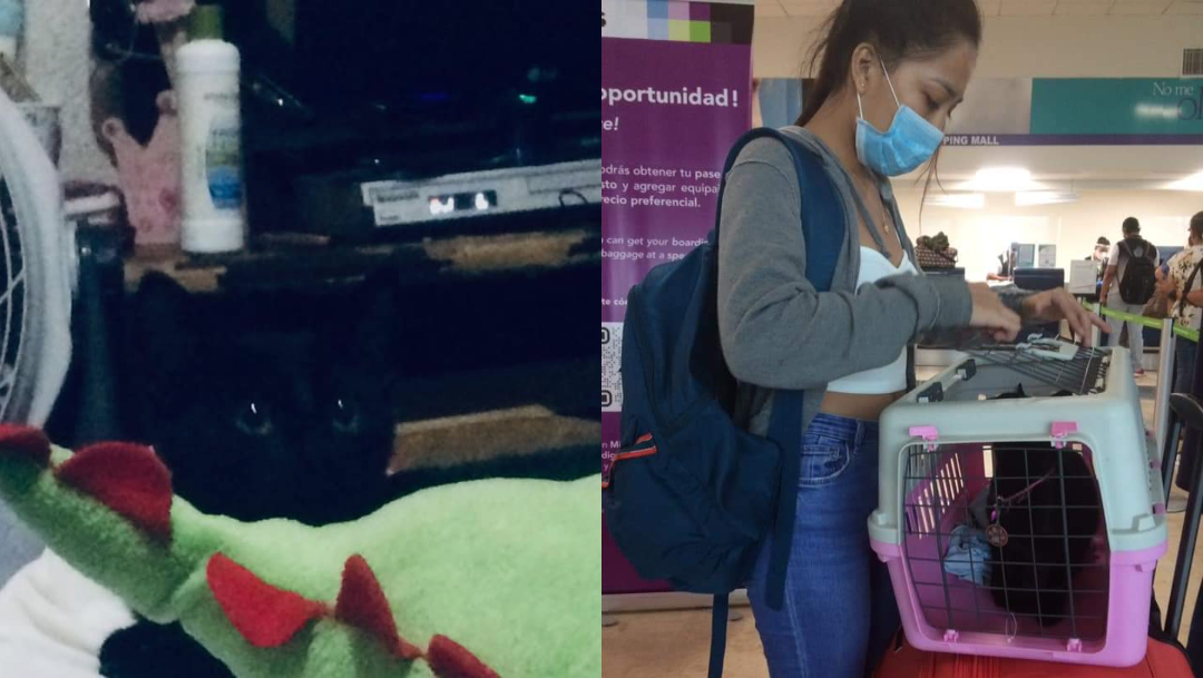 Viva Aerobus extravió a gatita, piden ayuda para localizarla