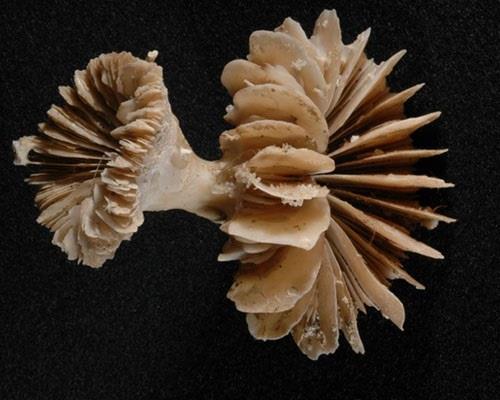 Los océanos eructan CO2 a la atmósfera y esto se sabe gracias a restos fosilizados de antiguos corales de aguas profundas