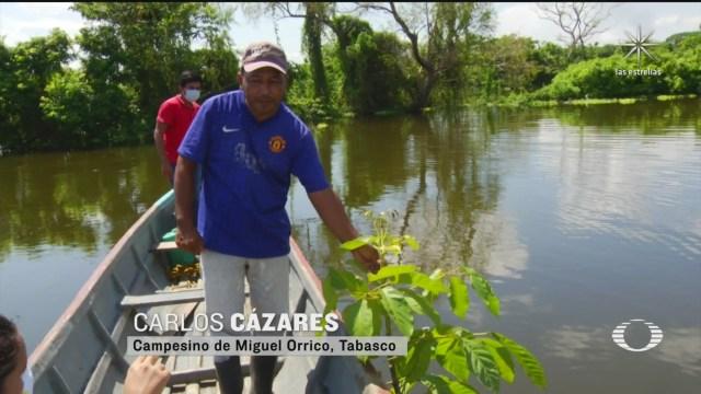 plantios de maderas preciosas quedan sepultadas bajo el agua en tabasco