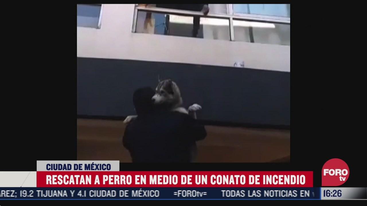 policias de cdmx rescatan a perrito atrapado en departamento incendiado