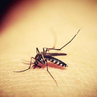 Sinaloa registra incrementos en casos de dengue