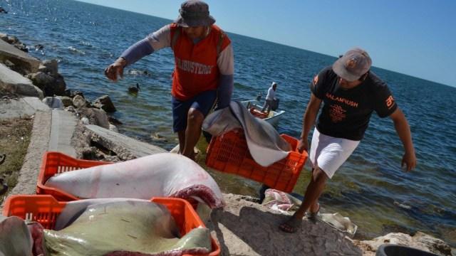 Campeche otorga seguro de vida gratuito a pescadores