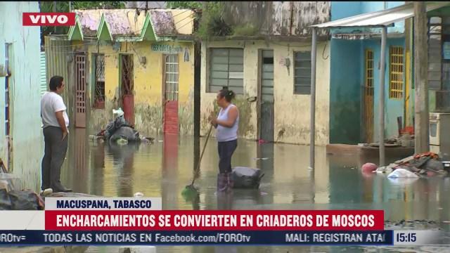 criaderos de moscos afectan la salud de damnificados por inundaciones en tabasco