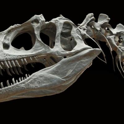 ¿Cómo era el cerebro de los dinosaurios? Científicos logran reconstruir un modelo