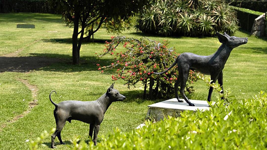 El Senado de la República aprobó que el xoloitzcuintle sea el nuevo símbolo de la CDMX
