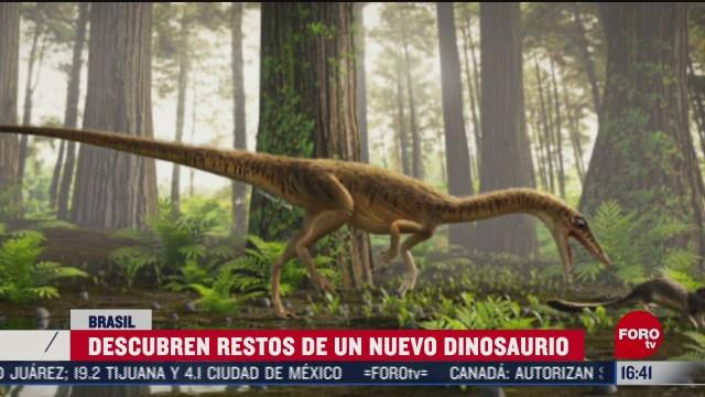 descubren restos de un nuevo dinosaurio en brasil