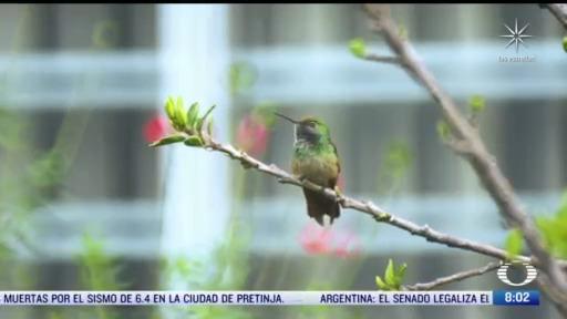 los colibries las aves mas pequenas del mundo