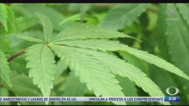 en que consiste el reglamento para el consumo de la marihuana medicinal
