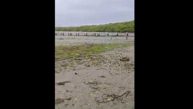 Laguna de Arbolillo se aleja más de 500 metros en Alvarado, Veracruz