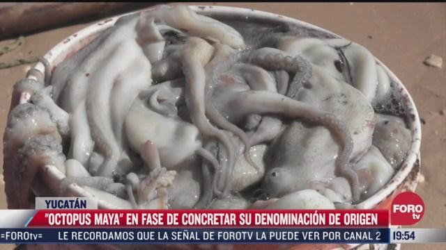 buscan denominacion de origen del pulpo en yucatan