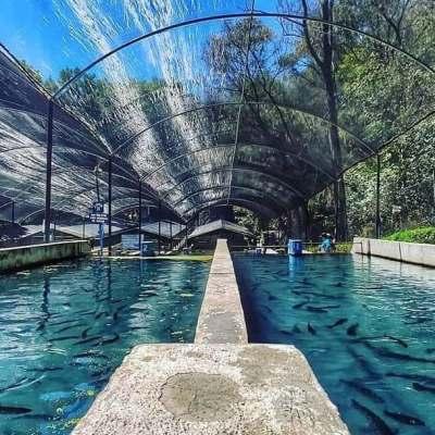 Hidalgo implementa proyecto acuícola para que productores de trucha se recuperen de la crisis