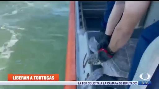 regresan a tortugas marinas tras ser rescatadas del frio extremo en texas