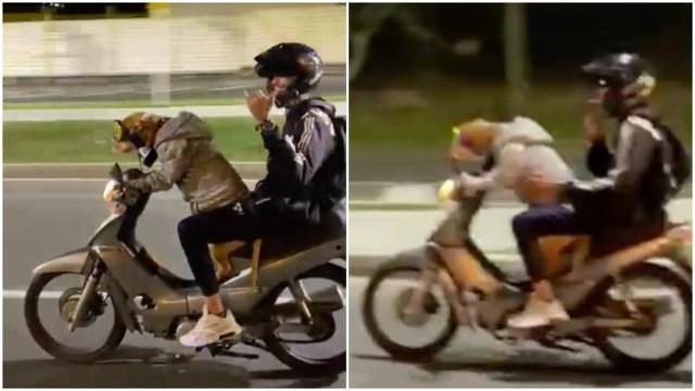 Perro maneja motocicleta en Colombia y divide opiniones en redes sociales