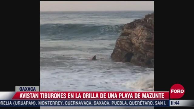 captan a pareja de tiburones en playas de oaxaca