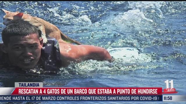 rescatan a gatos de un barco a punto de hundirse