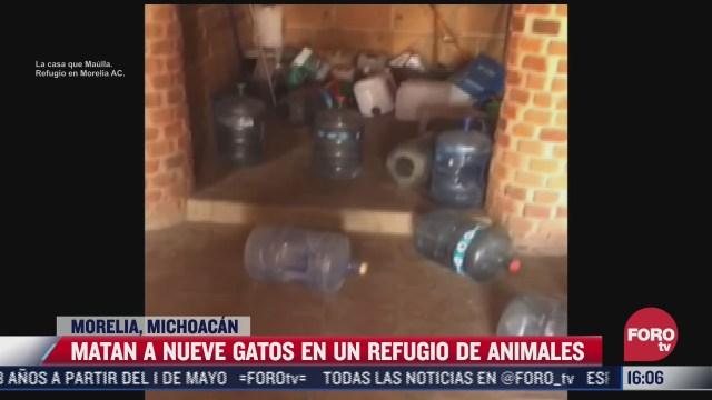 ataque contra refugio de animales deja 9 gatos muertos