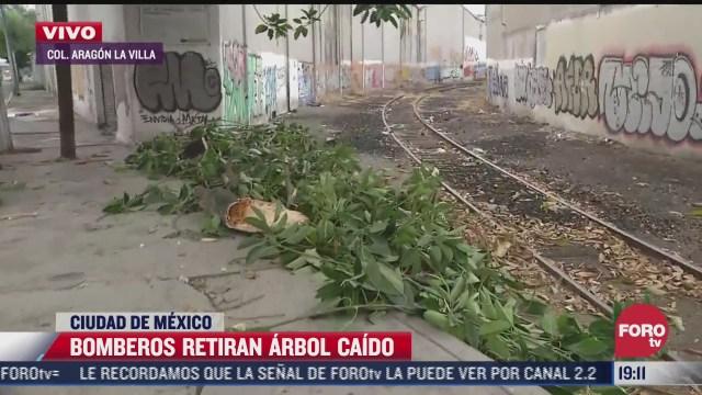 bomberos retiran arbol caido en colonia aragon la villa
