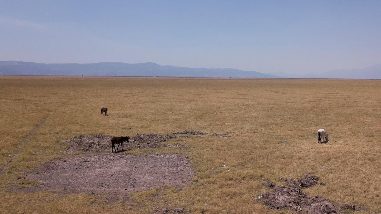 Falta de lluvias y grave deforestación afectan al lago de Cuitzeo, Michoacán (EFE)