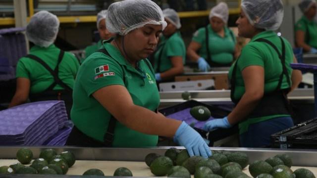 Fotografía que muestra a una mujer trabajando en una planta exportadora de aguacate
