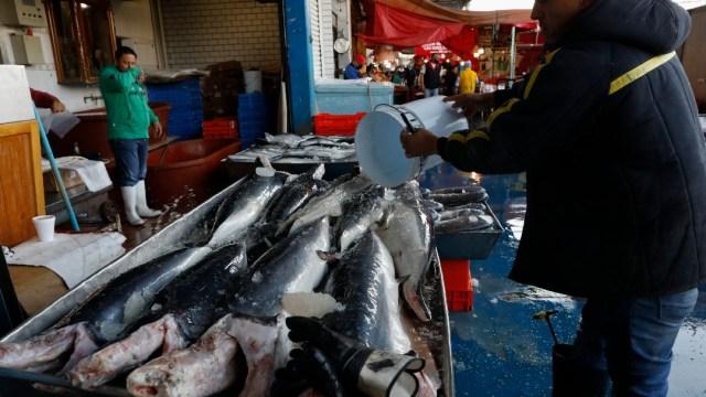 OMS pide suspender la venta de animales salvajes en mercados