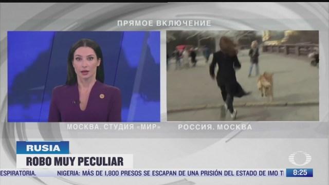 perro roba microfono a reportera