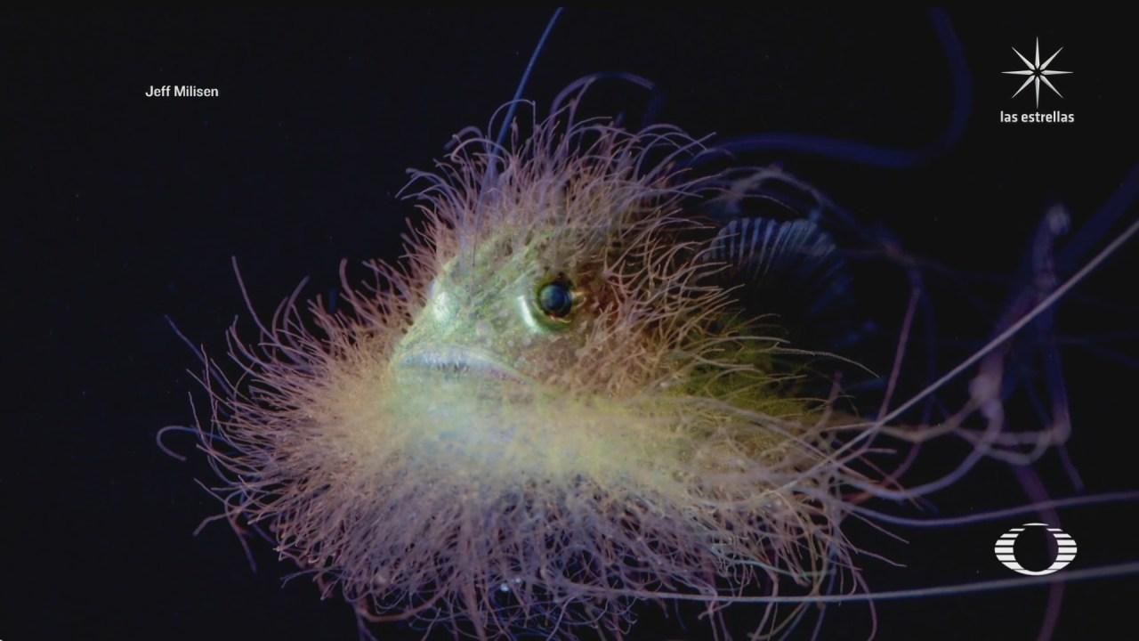 proyecto combina ciencia con fotografia marina