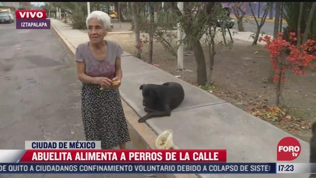 tierna abuelita alimenta a los perros de la colonia santa cruz meyehualco