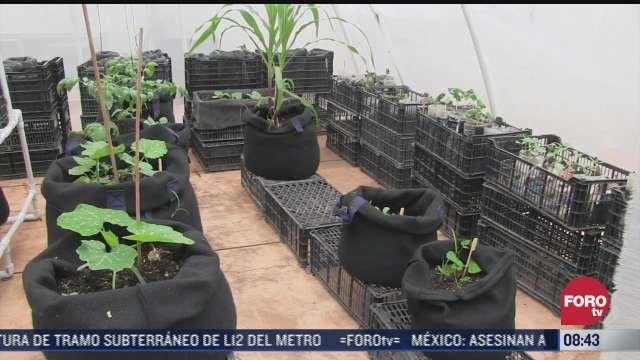 buscan reforestar con plantas las azoteas para combatir el calor en yucatan
