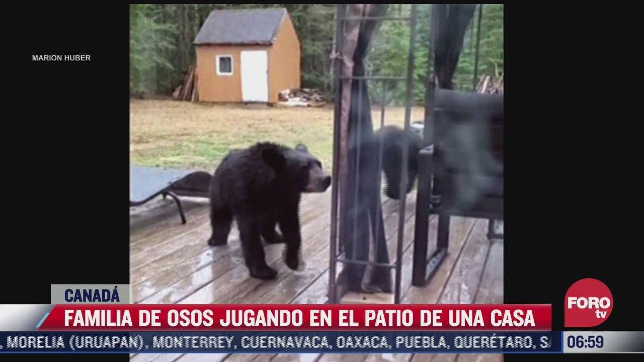 captan a familia de osos jugando en el patio de una casa