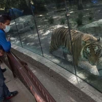 Cientos de familias visitaron el zoológico de Chapultepec el primer fin de semana de semáforo amarillo