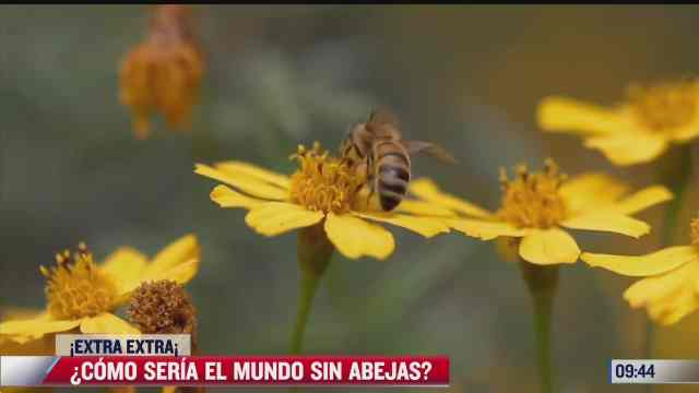 extra extra como seria el mundo sin abejas