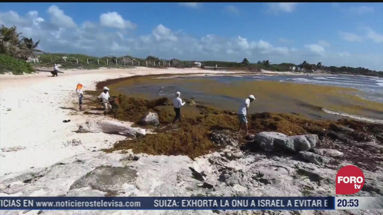 sargazo llega nuevamente a playas de quintana roo