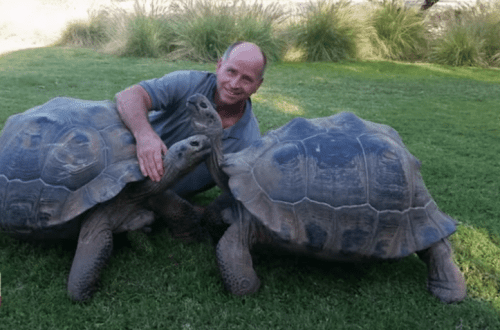 Galapagos tortoise killed during robbery in Arizona